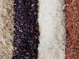 /agriculture/images/content/icon-rice.jpg