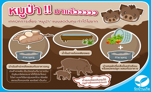 Infographic/35xi_Infographic_หมูป่า.jpg