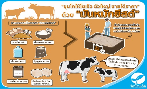 Infographic/42xi_Infographic_Cow_2.jpg